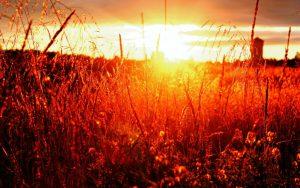 руны солнца
