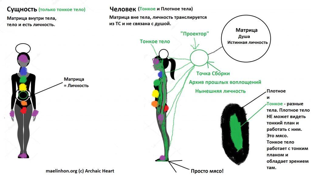 Строение тел человека и сущности